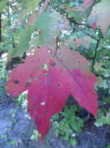 Hints of fall color