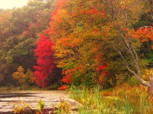 Delcarte Conservation area, Franklin,MA
