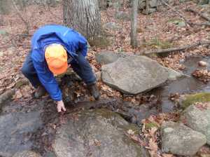 Fall leaves clogged a stream outlet, flooding the trail. Al ignored the cold to remove the blockage
