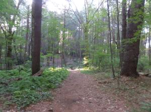 Trail at Macomber Reservation, Framingham