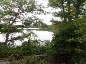 Neponset reservoir, viewed along the trails of Lane Conservation area