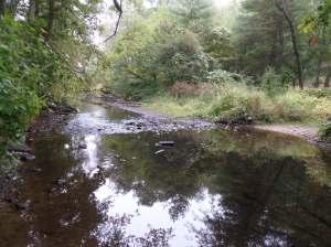 Charles River, High street Trail, Bellingham, MA