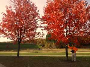 Fall foliage, Hopkinton MA State Park