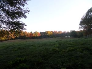 View of farm field, along the trail in the very early morning light