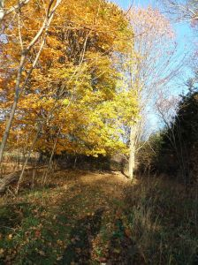 Fall colors along the trail in Millis