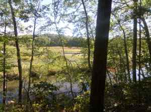 The west bank of the Blackstone River--water is very low