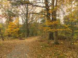 Bright yellow leaves wreathe the entrance to the trail at Choate Park