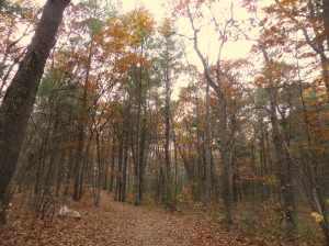 "This trail is a true ""easy walk"" along a graveled path through the woods"